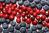 自109年1月20日至109年7月19日止(進口日),針對智利輸入貨品分類號列「0810.40.10.00-0鮮藍莓」,採加強抽批查驗。