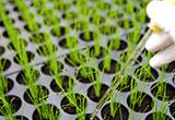 「輸入種子重新包裝申請再輸出簡易作業要點」,並自即日生效。