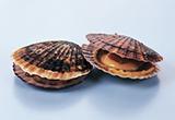 自106年4月14日至106年10月13日止(進口日),對日本輸入之「生鮮或冷藏墨魚」、「活、生鮮或冷藏海扇貝(含全貝及干貝)」,採加強抽批查驗,請查照。