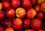 自110年9月20日起至111年3月19日止(進口日),針對智利輸入「0808.10.00.00.2,鮮蘋果」,採加強抽批查驗。